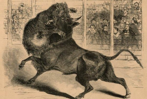 In The Mid-19th Century, Vicious Animal Combat Drew Thousands To Algiers
